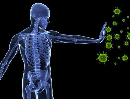 Relación del sistema inmunitario y la masa muscular ¿Protector contra la COVID-19?